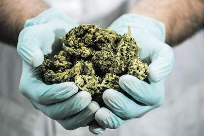 613841-cannabis-israel-grand-angle